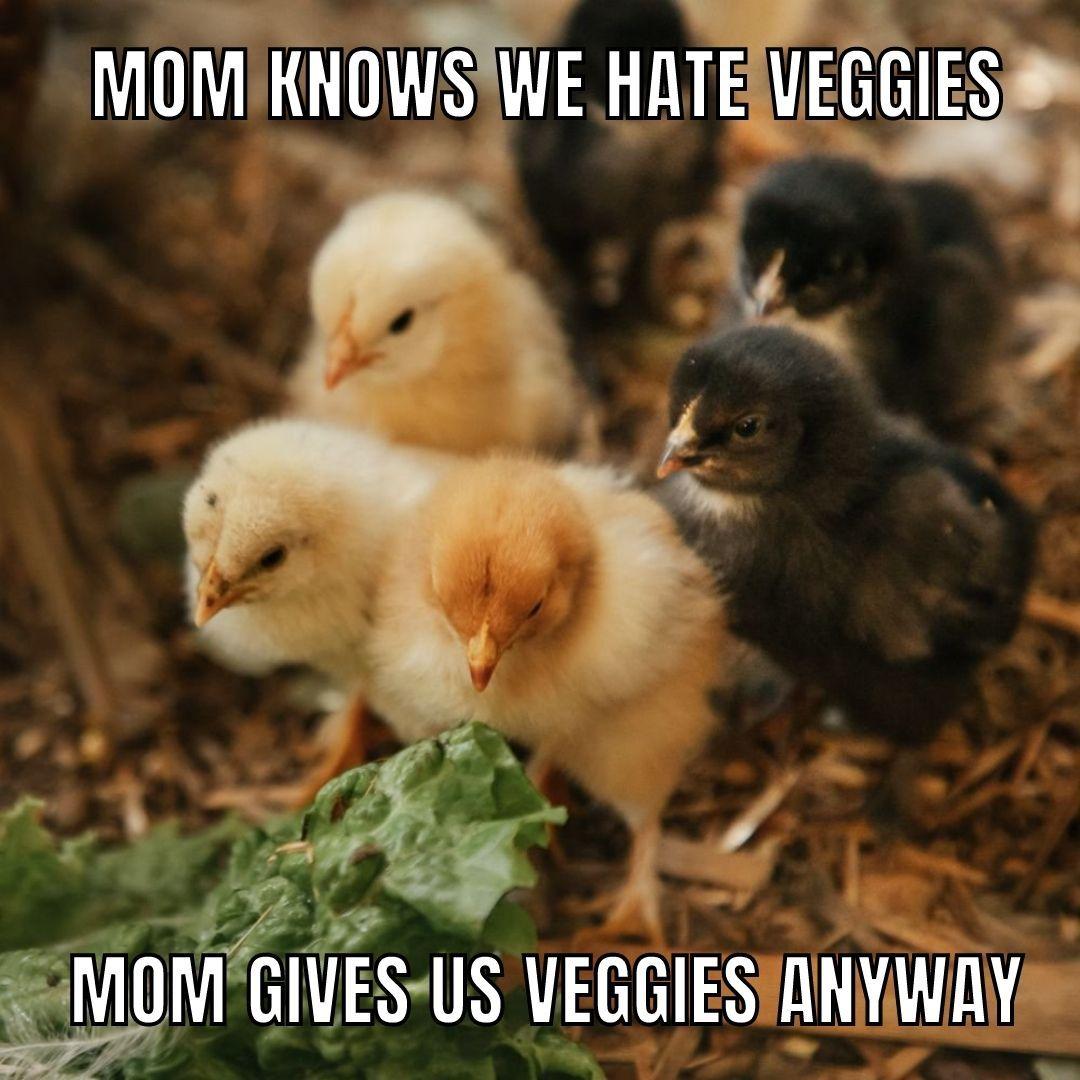 photogames meme chicks.jpg