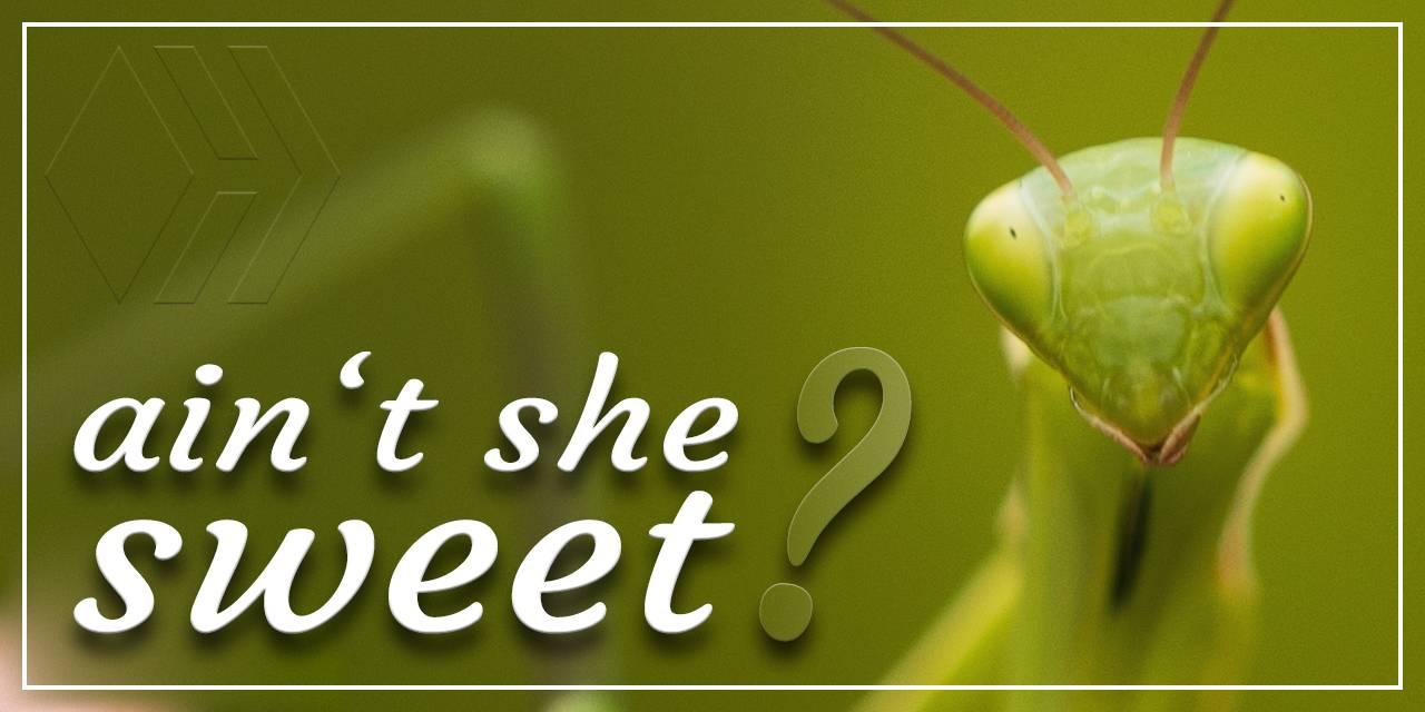 Mantis - ain't she sweet - Hive