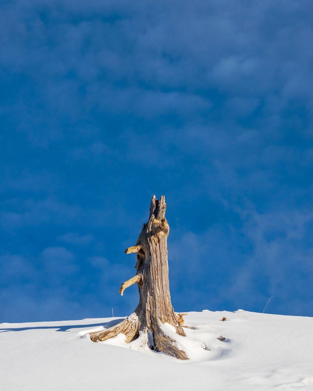 Tree Stump in the Snow on the Dobratsch Mountain
