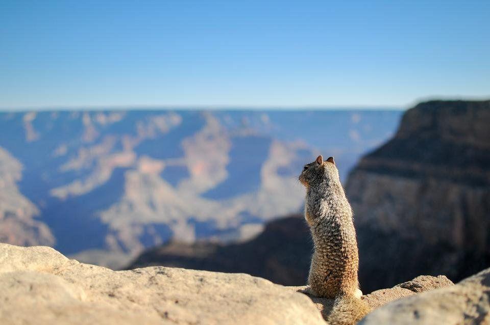 landscape-animal-mountain-top.jpg