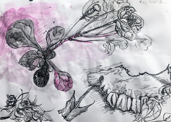 Teeth and Flowers | Zęby i kwiaty