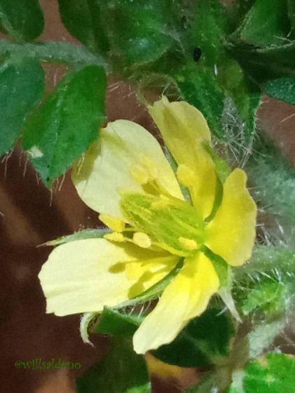 flor Reparada.jpg