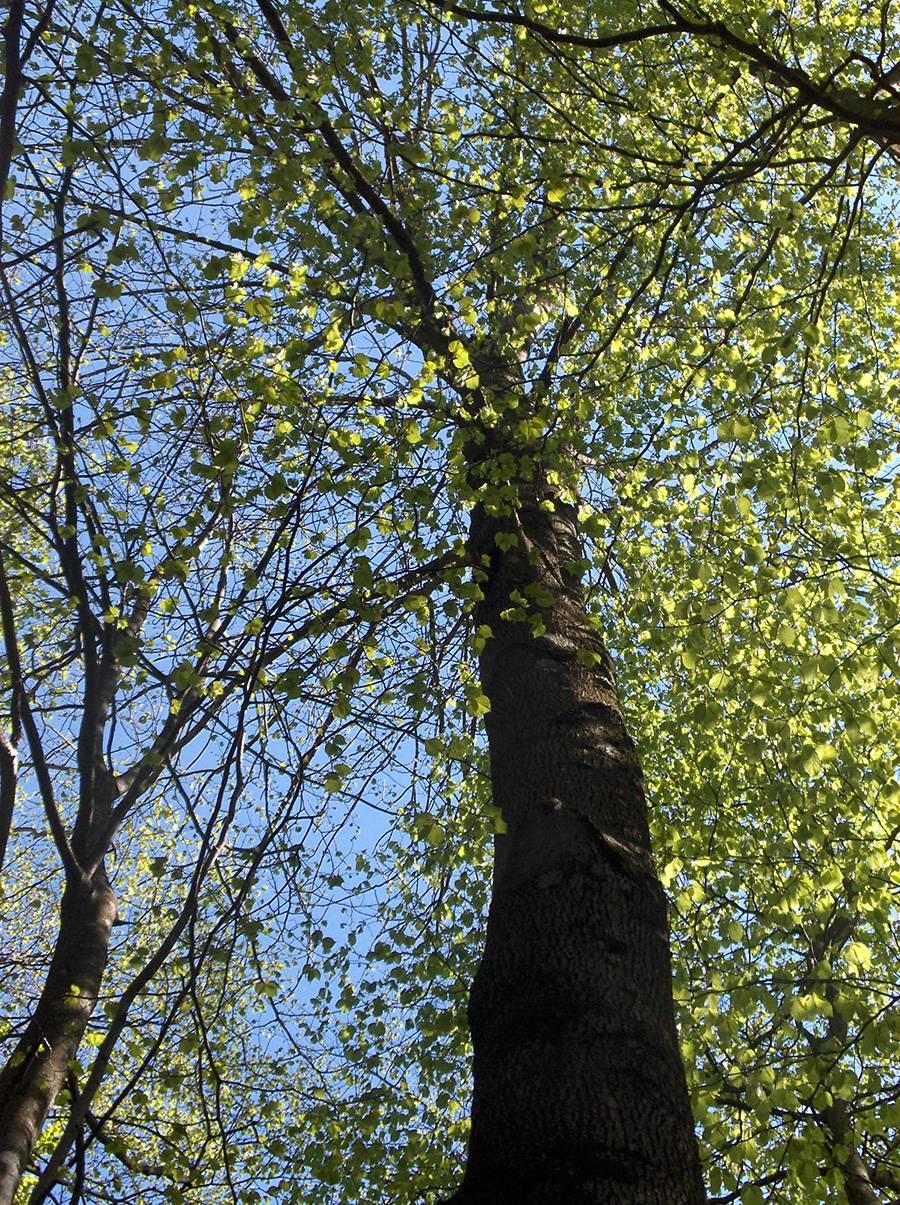 gozd15.jpg