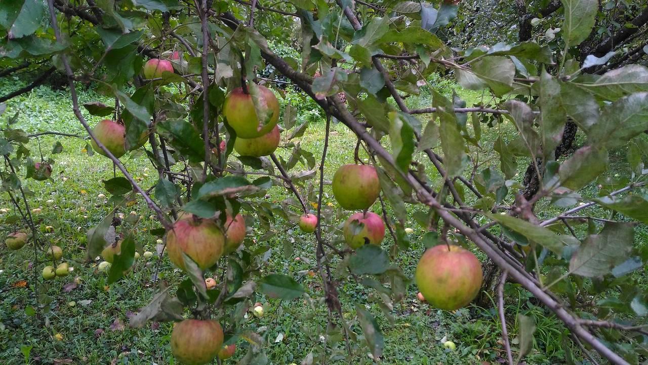 fruit8.jpg
