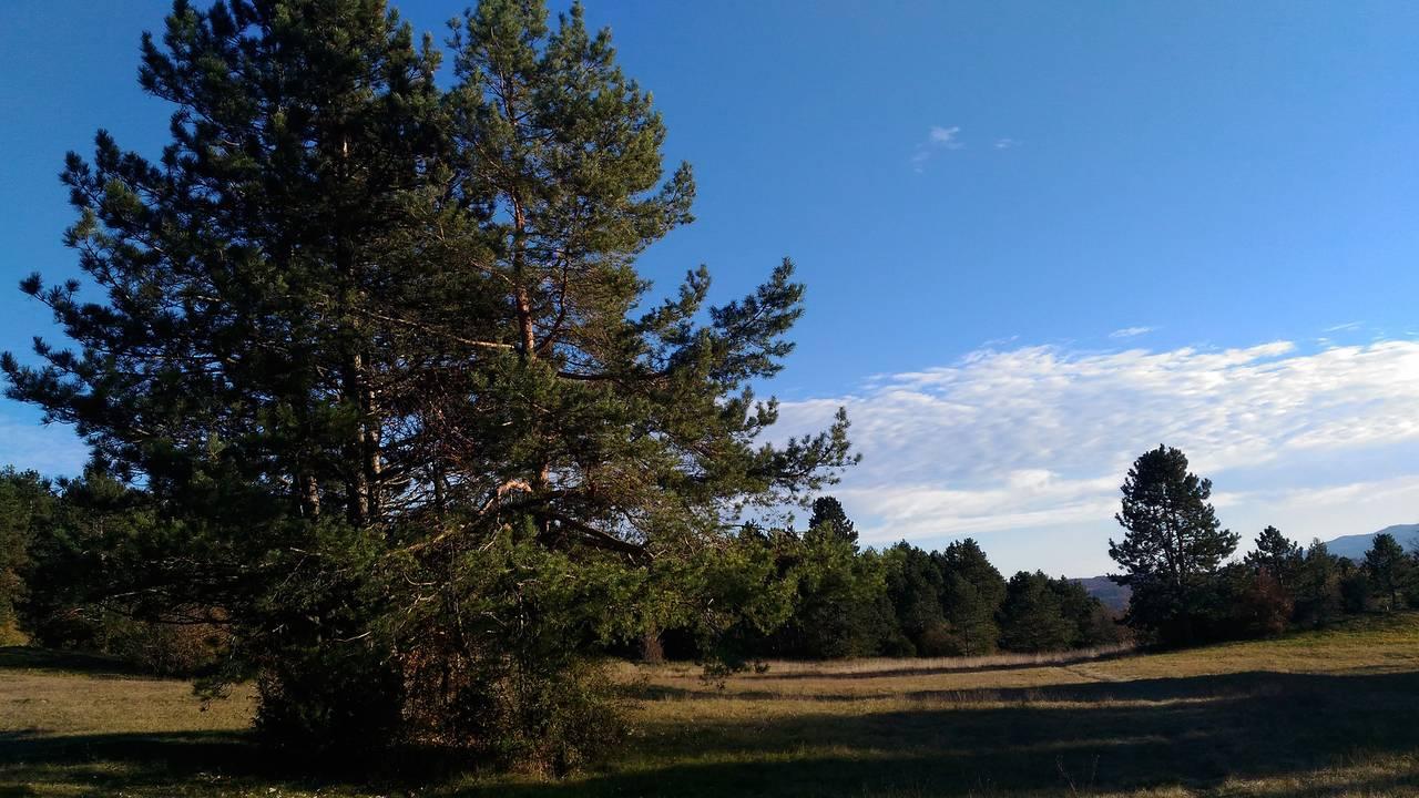 gozd13.jpg