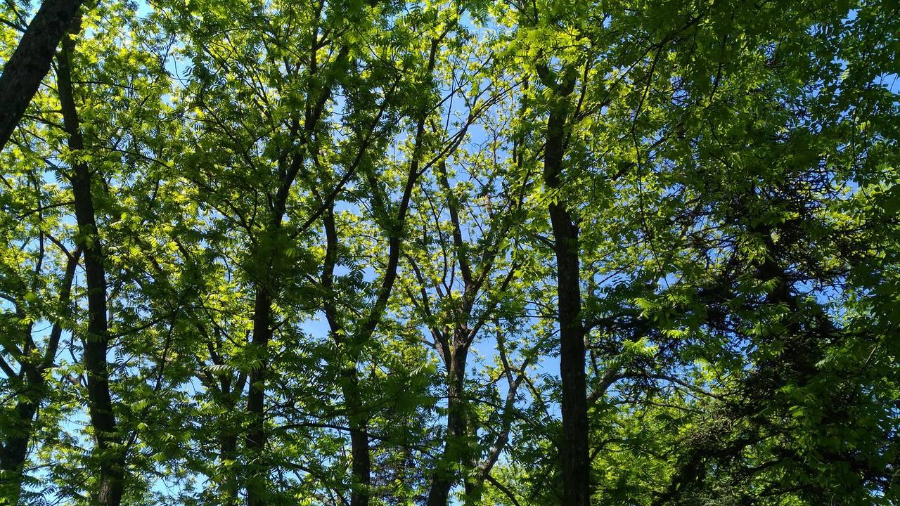 gozd17.jpg