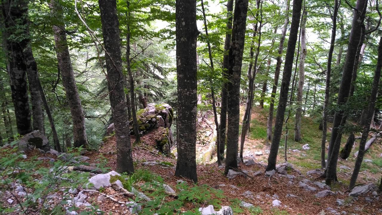 gozd19.jpg