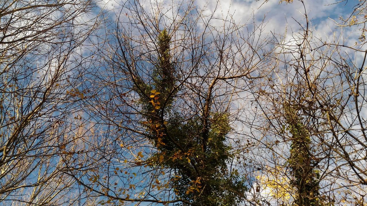 gozd11.jpg