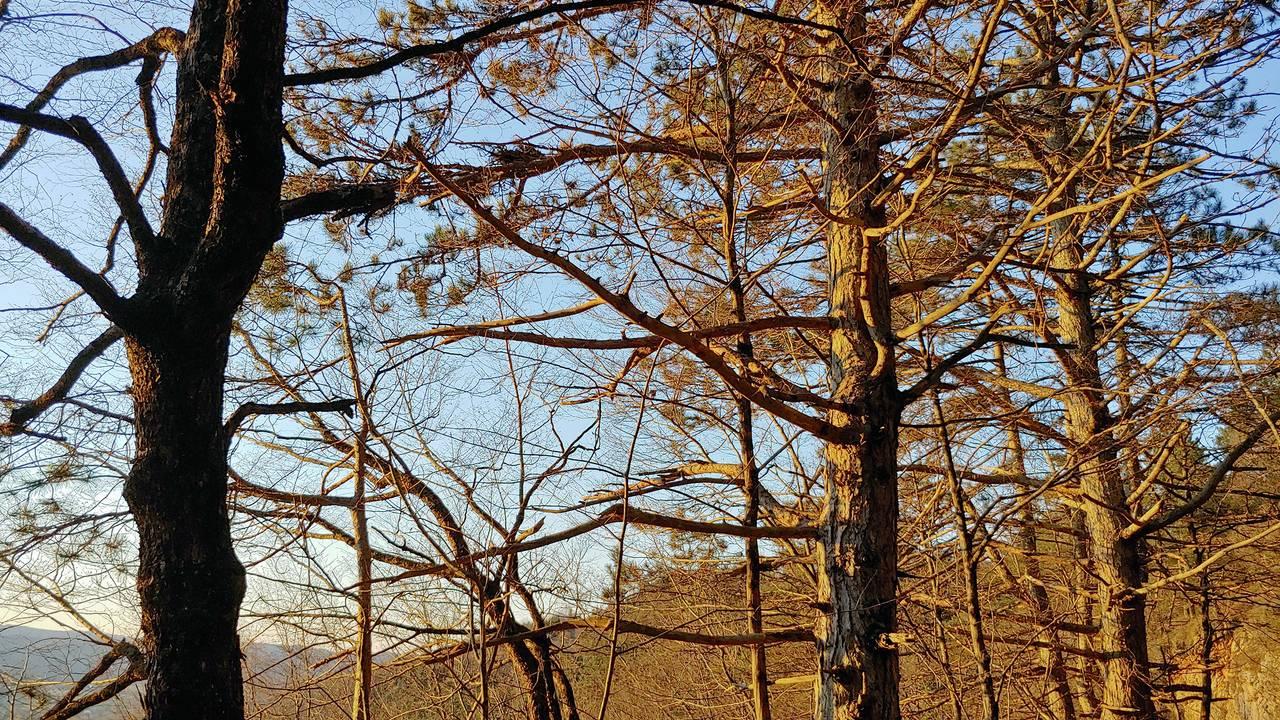 gozd10.jpg