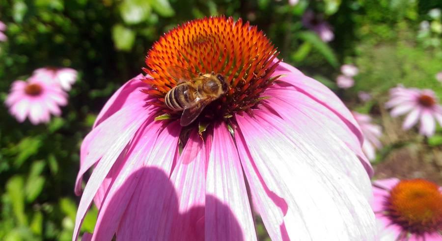 bees12.jpg