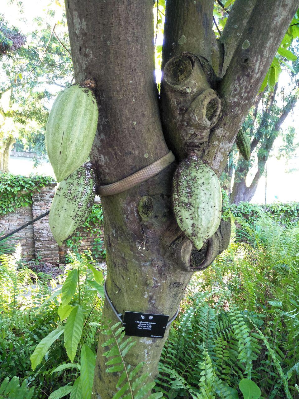 4 Cacao 2.jpg