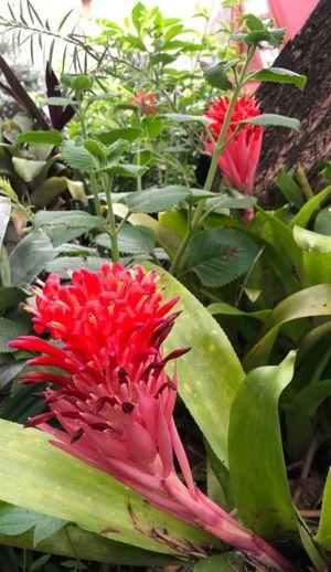 Wild flowers -