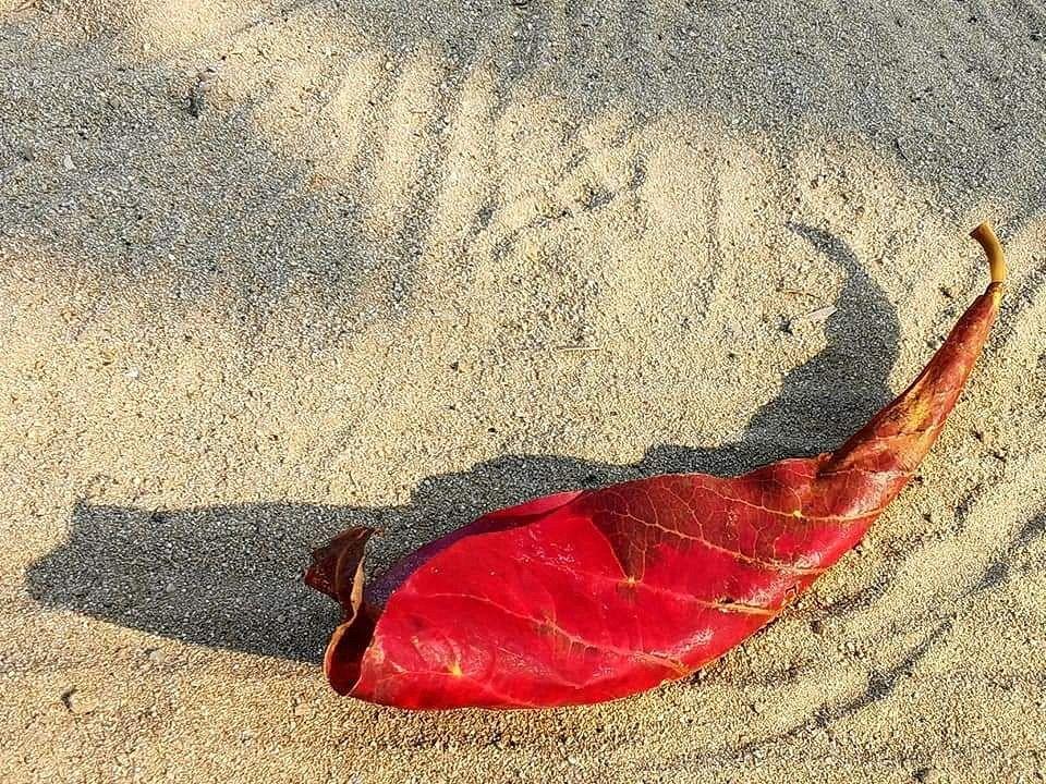 leaves_cactus_kohsamui99_063.jpg