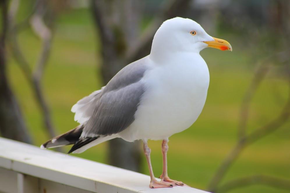 To akurat zwykła mewa | Just a seagull