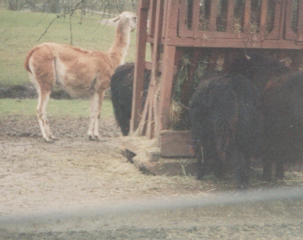 1992-12-26 - Saturday - Wildlife Safari Trip, Marilyn, Crystal-11.png