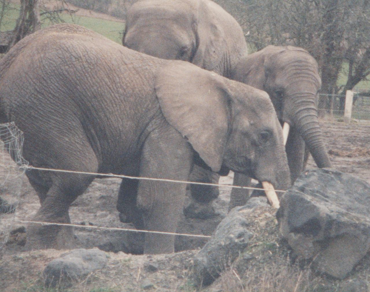 1992-12-26 - Saturday - Wildlife Safari Trip, Marilyn, Crystal-16.png