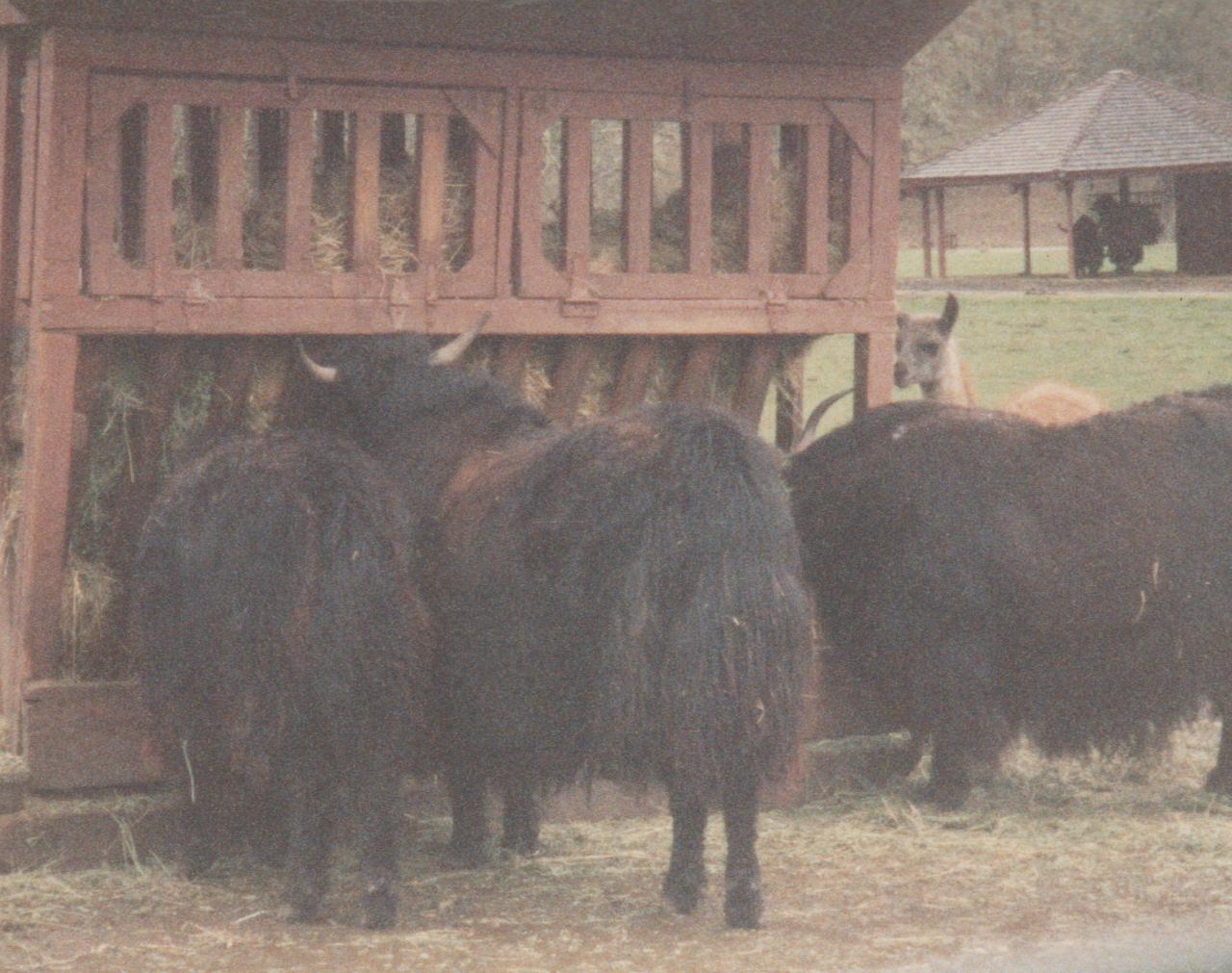 1992-12-26 - Saturday - Wildlife Safari Trip, Marilyn, Crystal-13.png