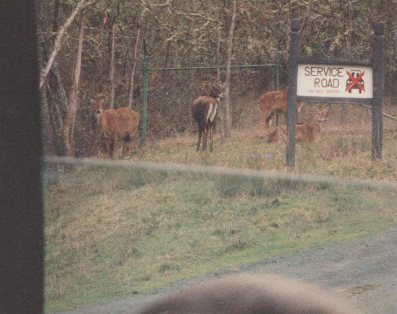 1992-12-26 - Saturday - Wildlife Safari Trip, Marilyn, Crystal-10.png
