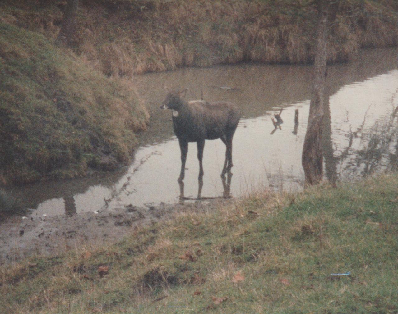 1992-12-26 - Saturday - Wildlife Safari Trip, Marilyn, Crystal-14.png