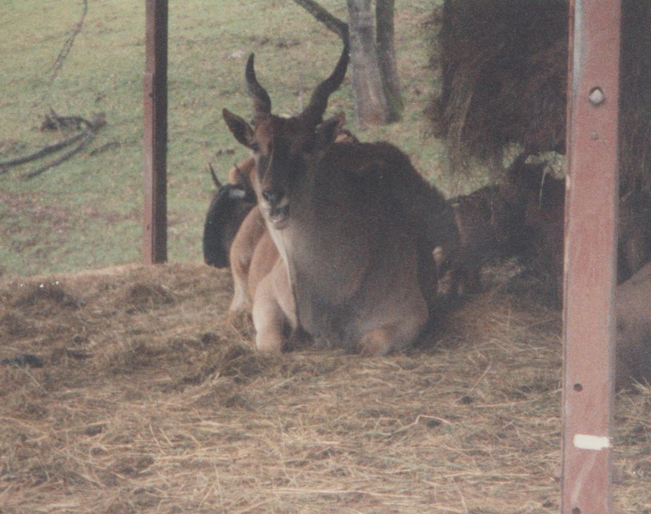 1992-12-26 - Saturday - Wildlife Safari Trip, Marilyn, Crystal-02.png
