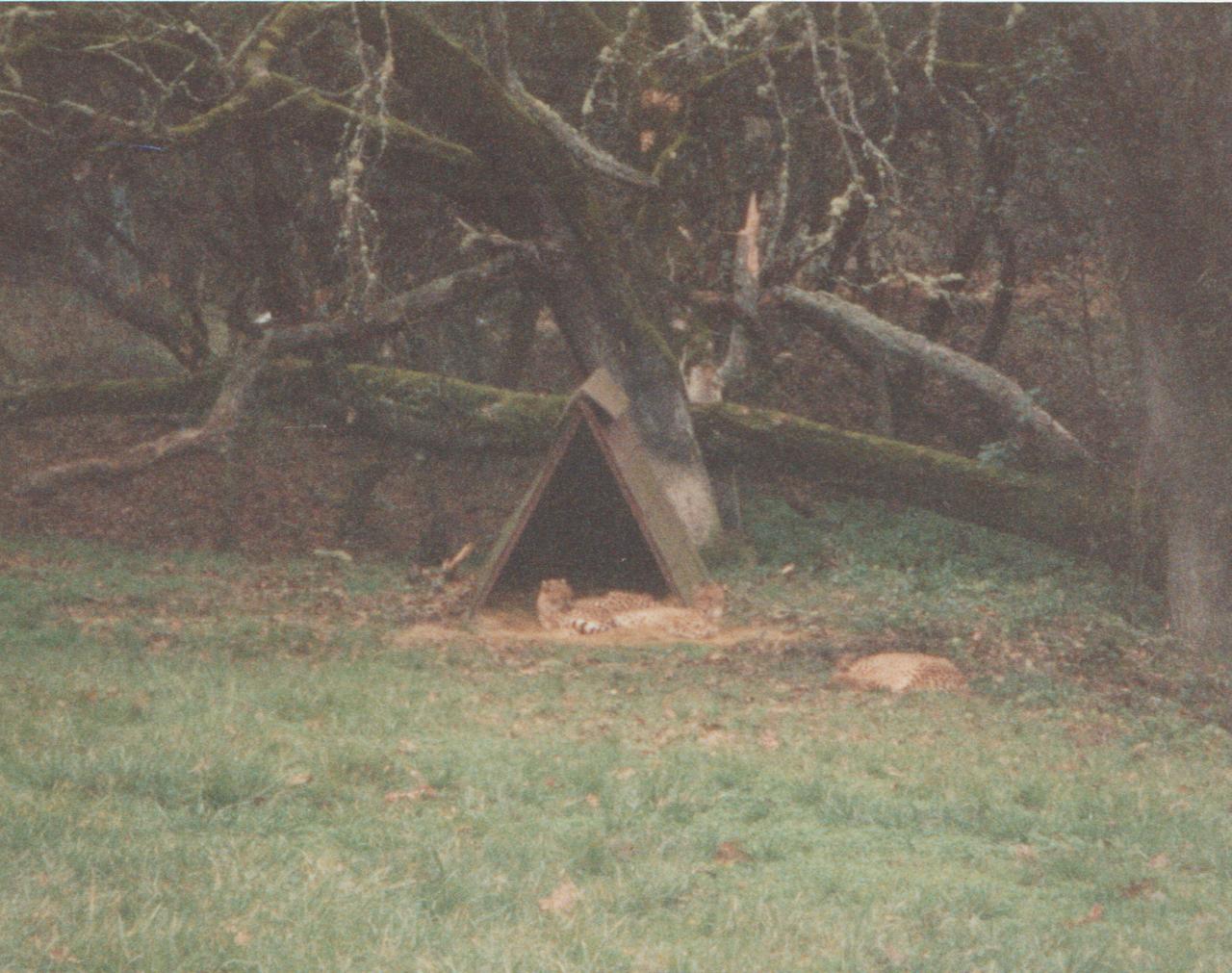 1992-12-26 - Saturday - Wildlife Safari Trip, Marilyn, Crystal-05.png