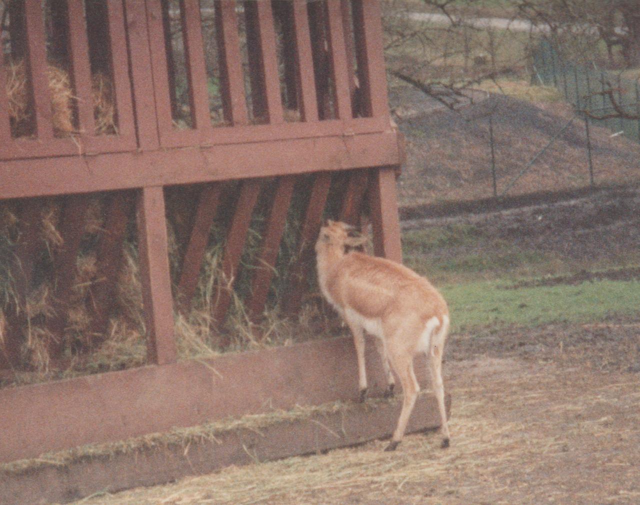 1992-12-26 - Saturday - Wildlife Safari Trip, Marilyn, Crystal-12.png