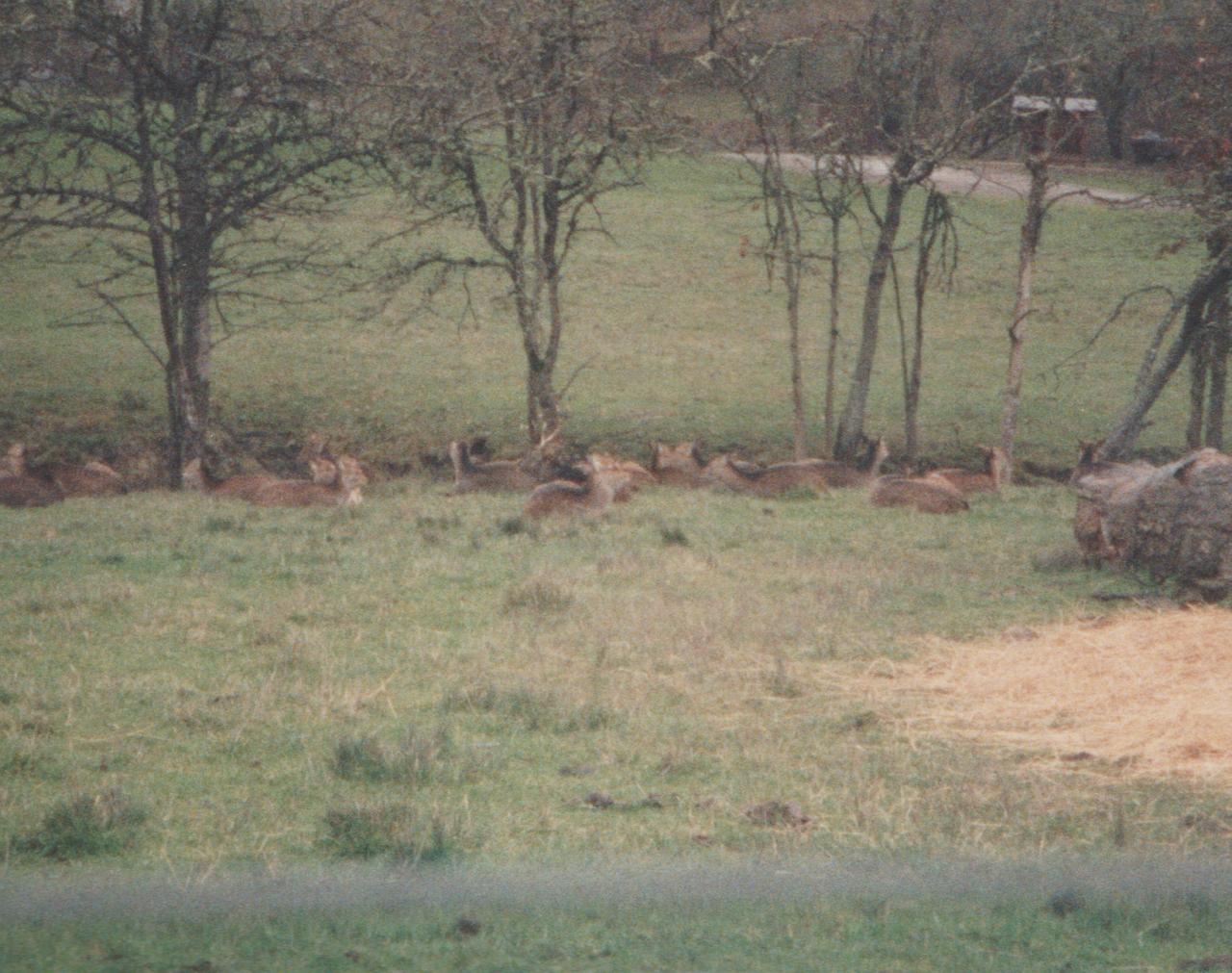 1992-12-26 - Saturday - Wildlife Safari Trip, Marilyn, Crystal-09.png