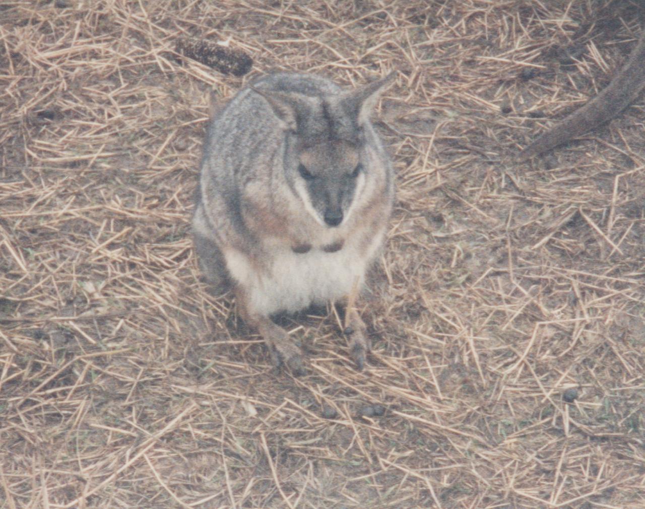 1992-12-26 - Saturday - Wildlife Safari Trip, Marilyn, Crystal-19.png