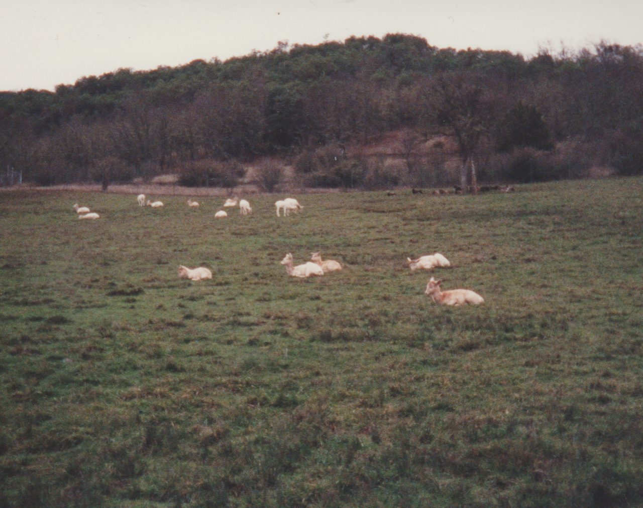 1992-12-26 - Saturday - Wildlife Safari Trip, Marilyn, Crystal-07.png