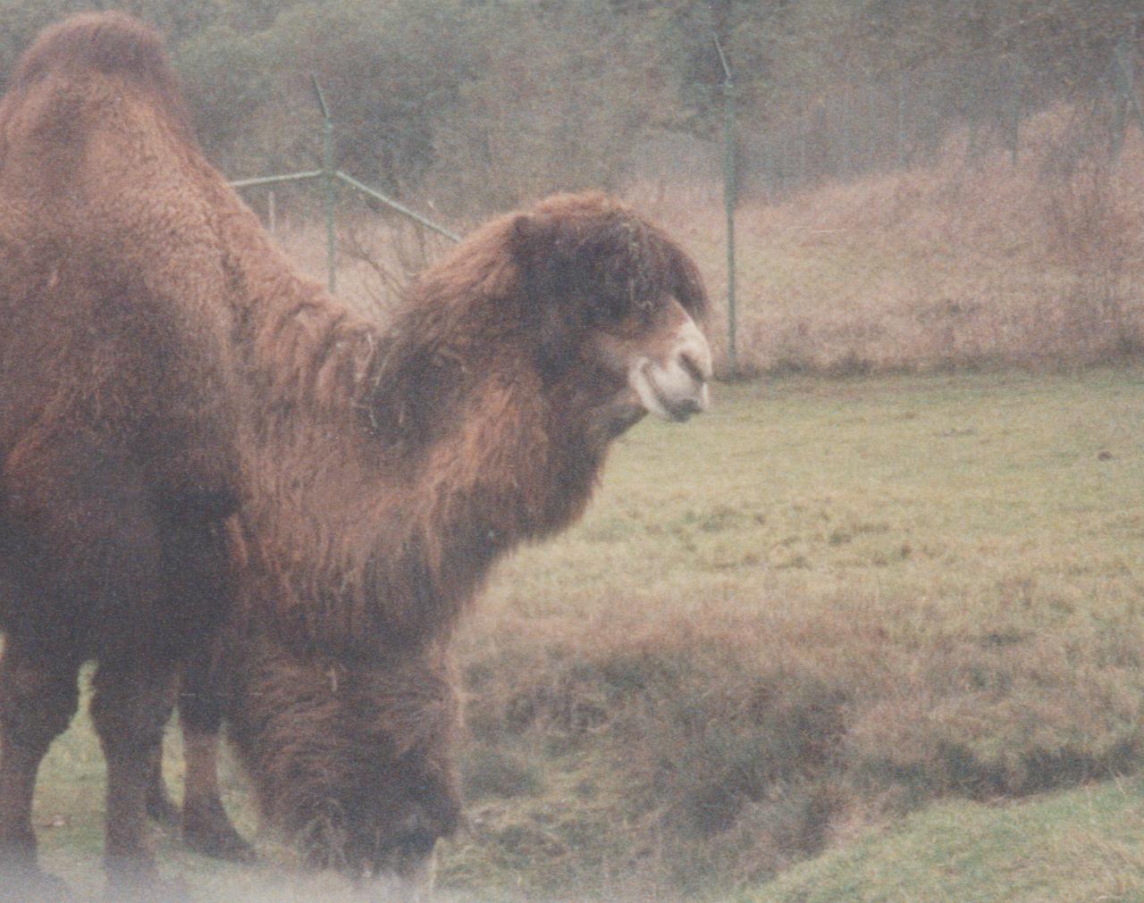 1992-12-26 - Saturday - Wildlife Safari Trip, Marilyn, Crystal-18.png