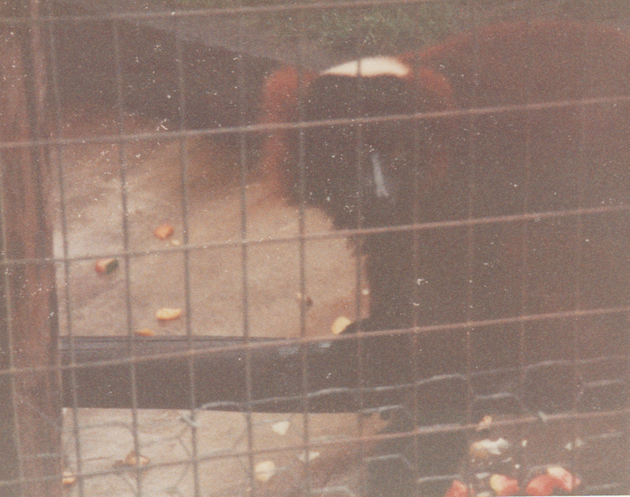 1992-12-26 - Saturday - Wildlife Safari Trip, Marilyn, Crystal-04.png