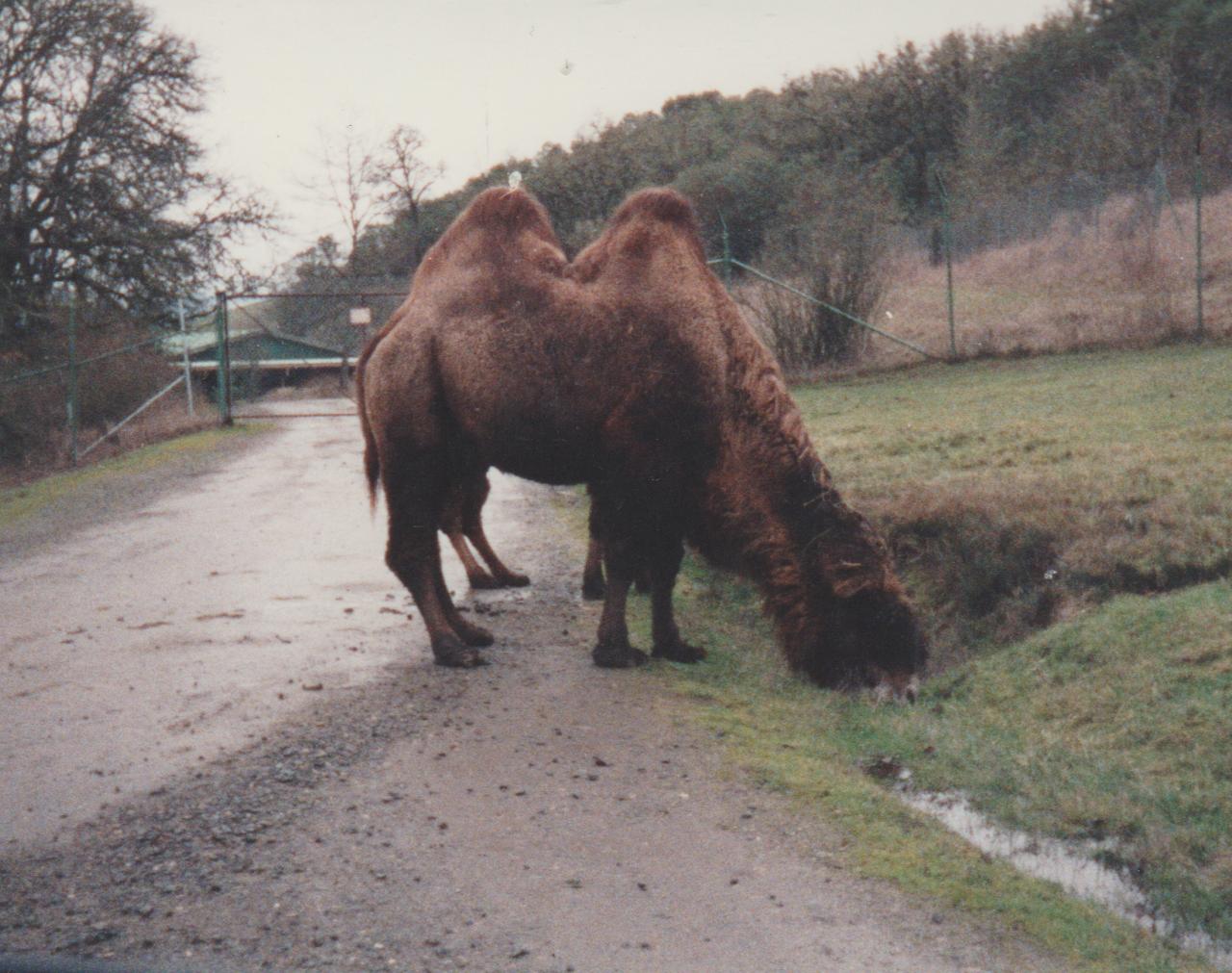 1992-12-26 - Saturday - Wildlife Safari Trip, Marilyn, Crystal-17.png