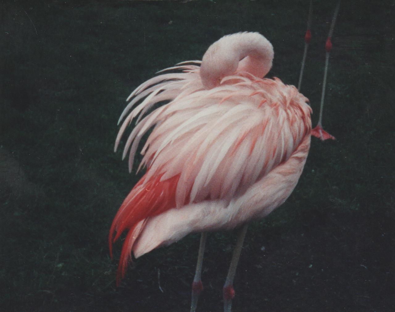 1992-12-26 - Saturday - Wildlife Safari Trip, Marilyn, Crystal-20.png