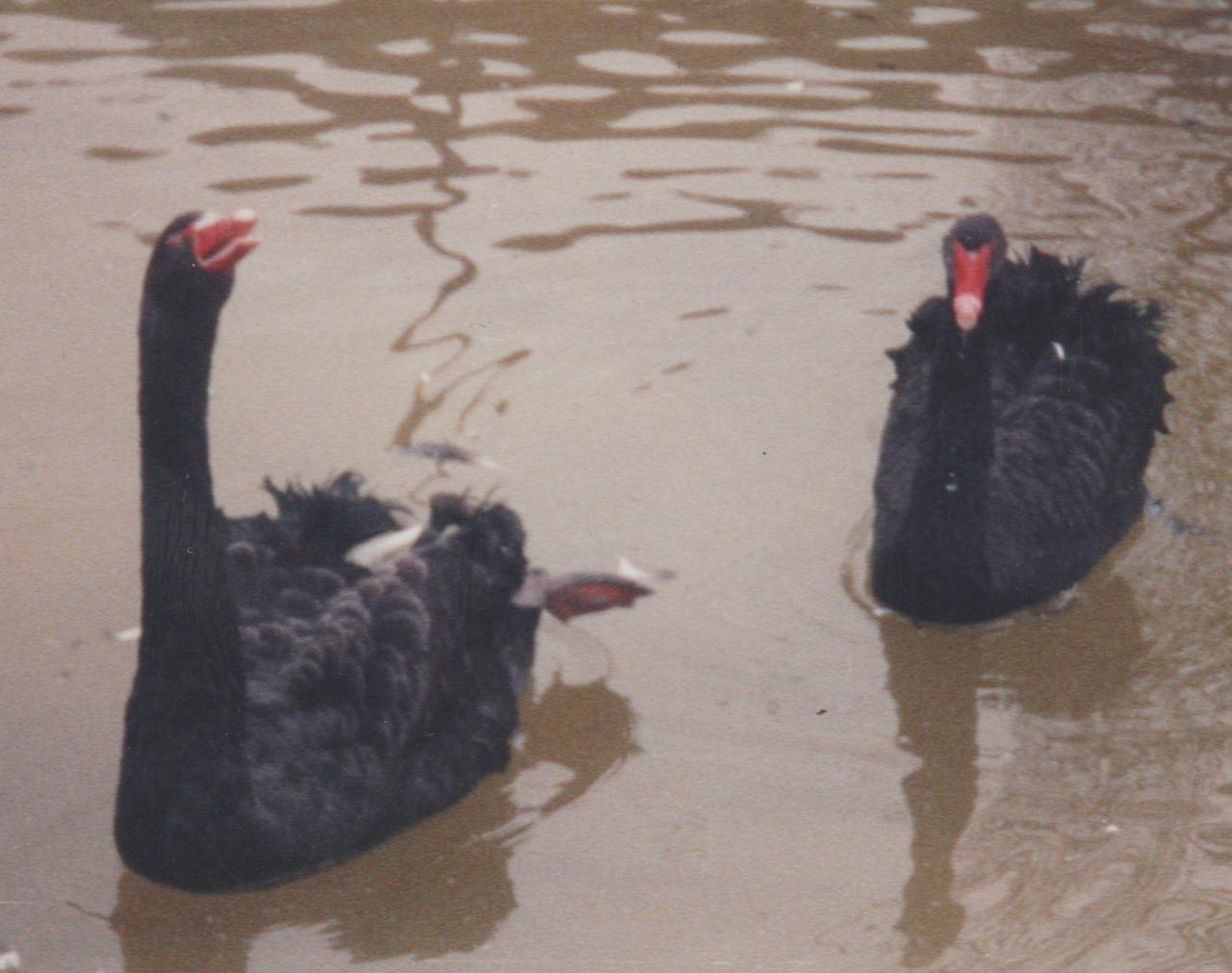 1992-12-26 - Saturday - Wildlife Safari Trip, Marilyn, Crystal-22.png