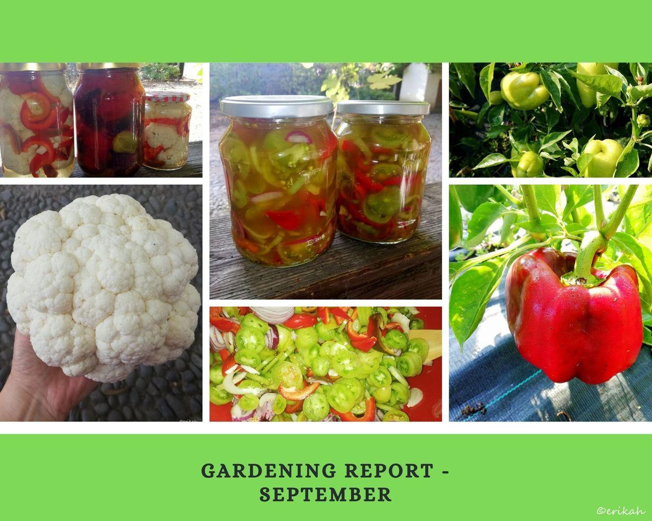 Gardening Report.jpg