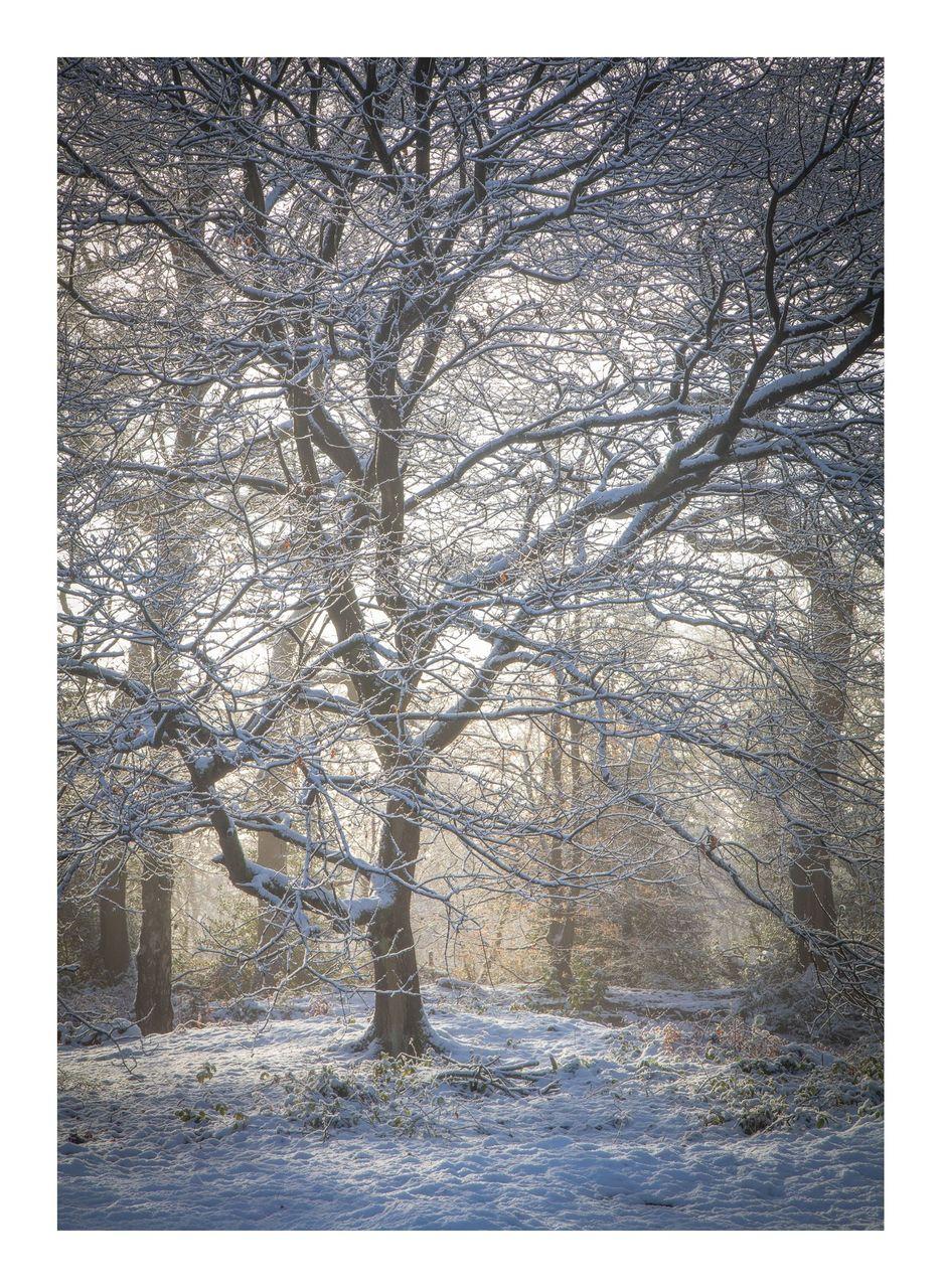 12Beech in Winter Light - © Kieran Metcalfe Bdr.jpg