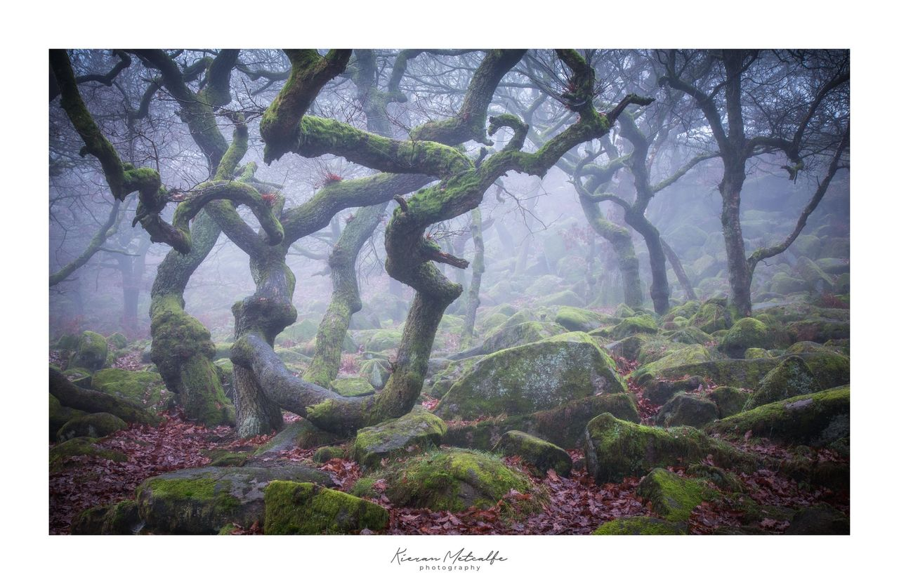 Hydra - © Kieran Metcalfe BdrSig.jpg