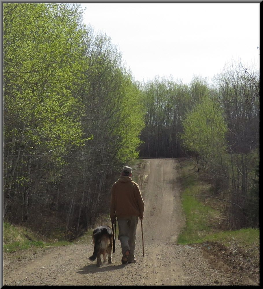 walking Bruno down road lined with fresh green leaves.JPG