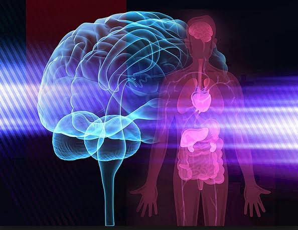 The Brain And Body Works Together For Good