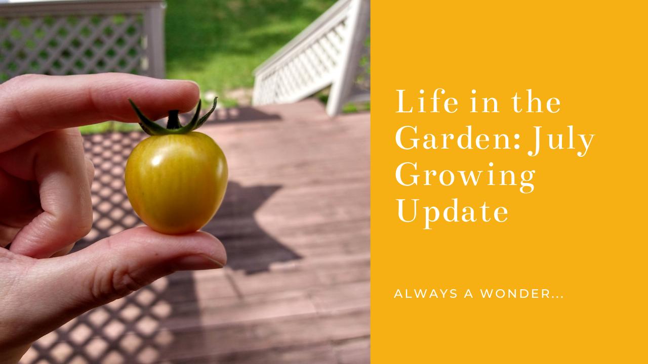July Garden Update 2021.png