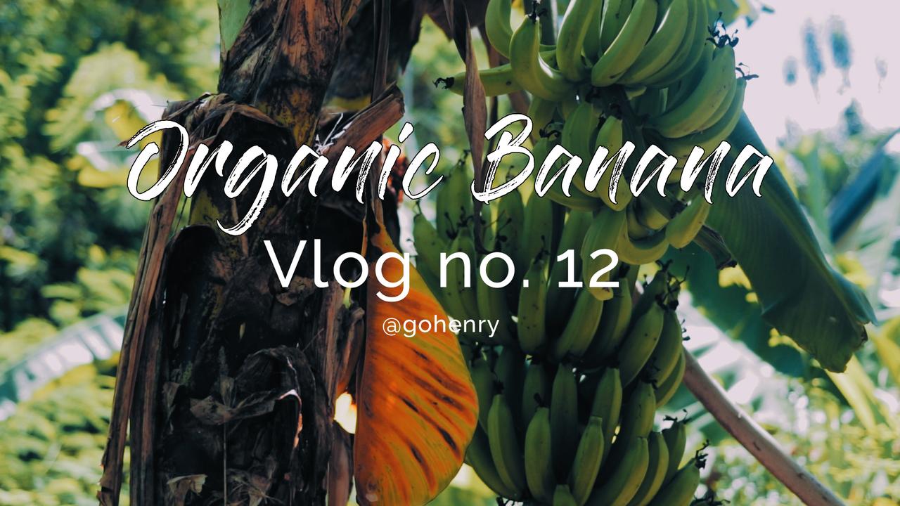 Organic Banana by Henry.png