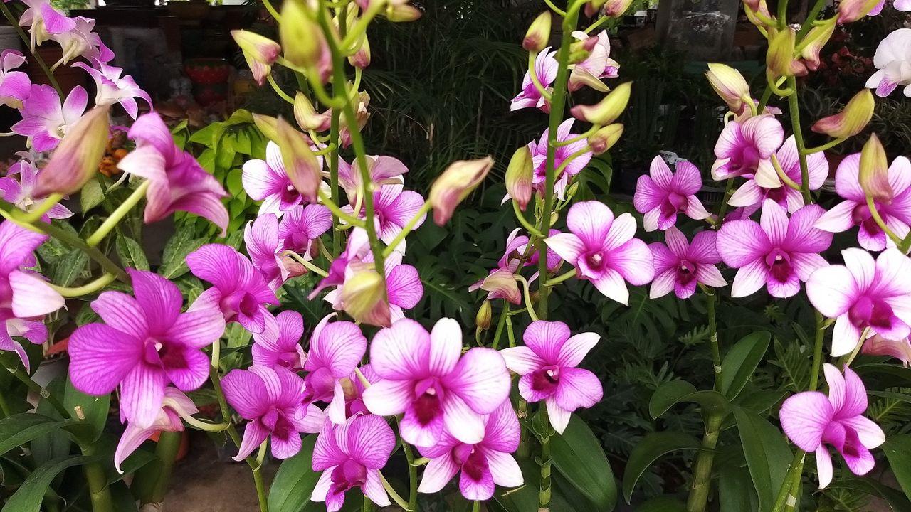 flower_1u.jpg