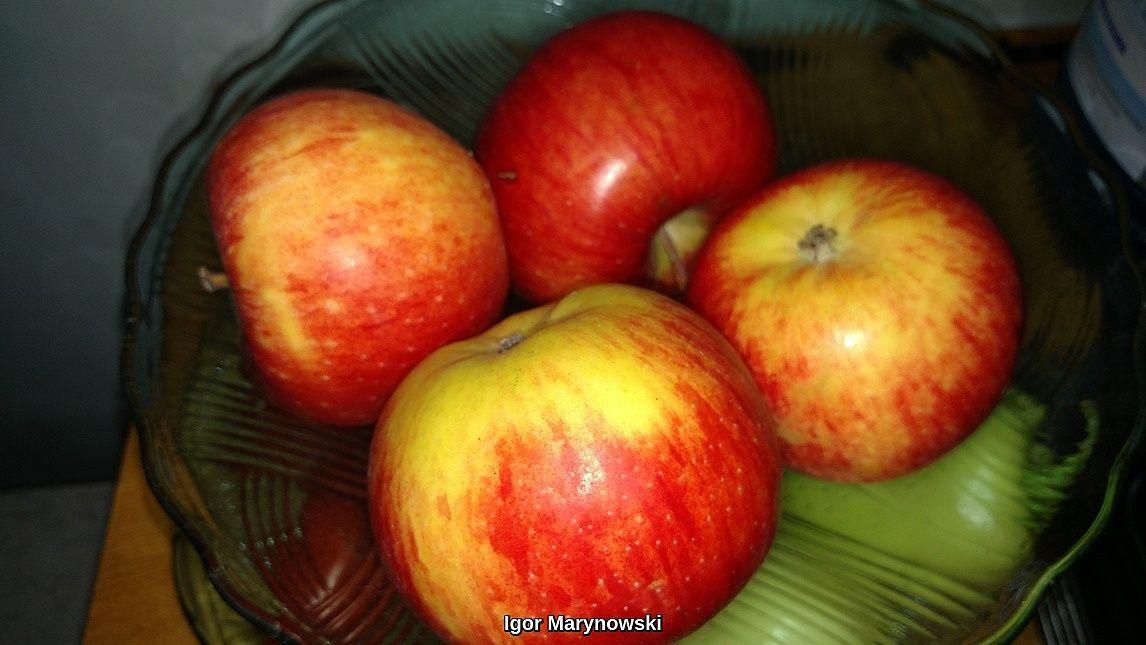 apples123.jpg