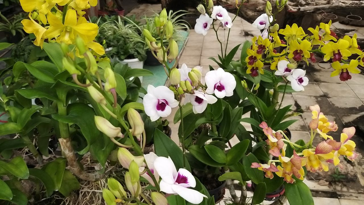 flower_9u.jpg