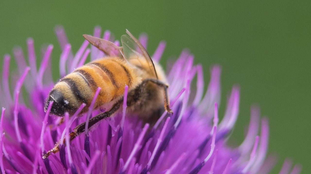 hive bee.jpg