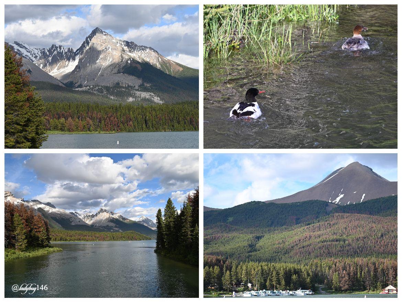 maligne lake (20).jpg
