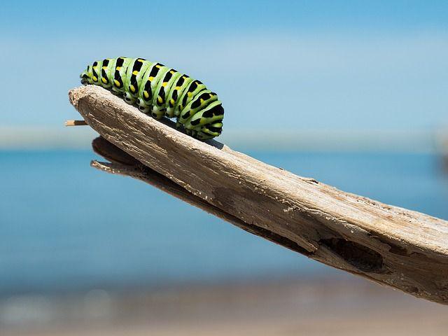 caterpillar-1209834_640.jpg