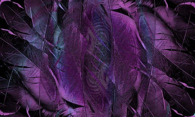 feather-4431599_640.jpg