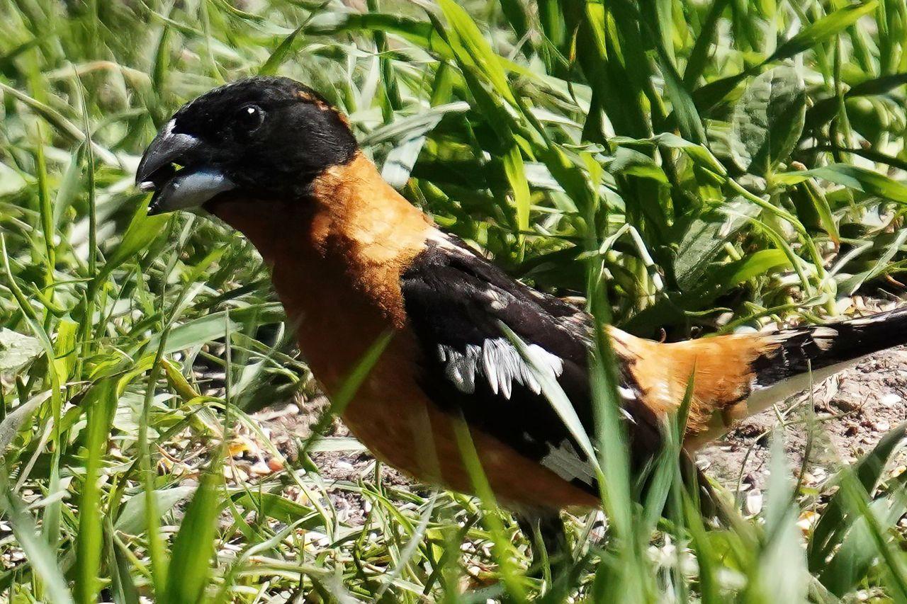K-Birdfeeder-710.jpg