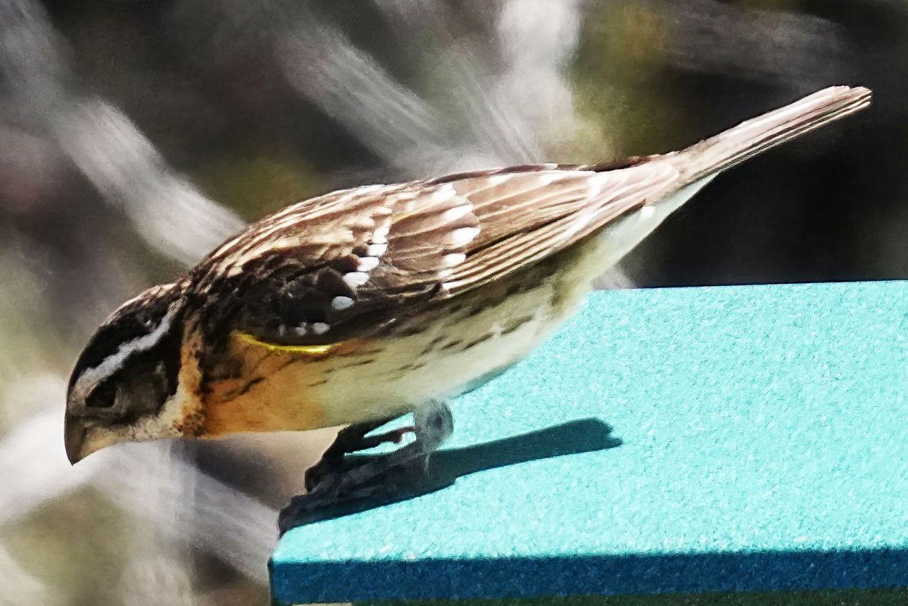 K-Birdfeeder-687-Crop.jpg